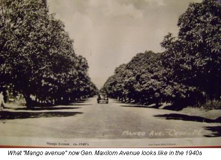 picture-of-old-mango-avenue